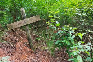 forest grave site marked by cross